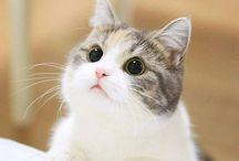 котики, вы любите котиков?
