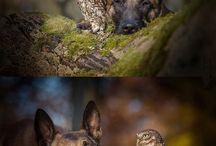 Το λυκόσκυλο