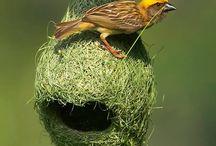 Birds / birds,bird photos,nature,
