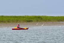 Nature Program / Kiawah Island is renowned for its natural beauty and abundant wildlife. Surrounded by the Atlantic with vast salt marshes, lush maritime forests, brackish water ponds, and picturesque dunes. One can observe the tremendous variety of lora and fauna present on this pristine barrier island. http://www.kiawahresort.com/recreation/by-interest/nature-program / by Kiawah Island Golf Resort