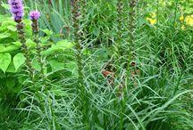 Plants I want / by Susan Morcom