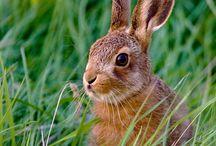 Adorable Bunnies / by Victoria Davis