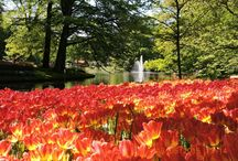 Tulip Garden in Europe