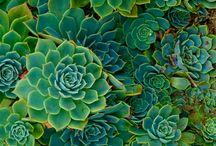 Kk / Plants