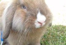"""Bunny Blue""""s liv / Bunny er en dejlig diva kanin med et godt hjerte   Jeg elsker min guldklump hun er som mit barn hun er skøn og sød og man kan kun holde af hinde ❤️  Hun er racen Løvehoved - Dværgvædder  Med lysebrune øjne  Lang bød lækker pels farven sølv grå med lidt lys brun i."""