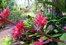 Hawaiian Gardens