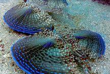 Peixes / Peixes