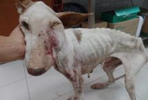 Poor thing / Stop animal abuse,animal testing, and abandoned there pets . This poor dog is desperate for love and care and a home but he didn't get any till now when he is in the worst conditions. SAVE MORE ANIMALS!!!!!!!!