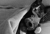 Cute Kitty Cat!
