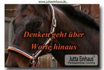 Pferdegestützte Impulse / Impulse aus Pferdegestützten Einzelcoachings
