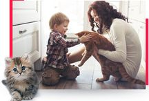 Nova Scotia Multi-Species Rescues / Multi-species animal rescues (dogs, cats, exotics) located throughout Nova Scotia.