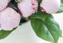 fleurs//květiny//flowers / by Barbora Hatt