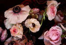Flowers, Gardens, & Pools / by Marianne Sanderson
