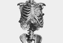 cientific ilustration - human Anatomy / All of human body you want to know.
