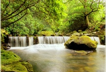 Woodland waterfall pictures
