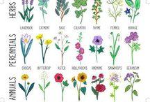 Kert, gyógynövények