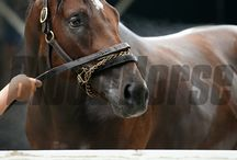 Jess's Dream / by Curlin out of Rachel Alexandra / by Blood-Horse