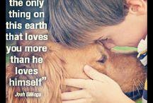 Pets we Love