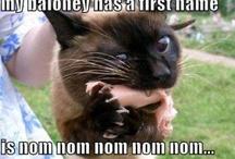 funny pics / by Nicole Rae