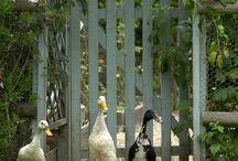 Garden Animals / Zwierzęta w ogrodzie