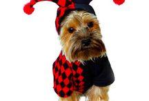Productos para Mascotas / Encuentra novedosos accesorios para tu mascotas, camas, correas, ropa, etc.