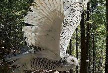 Vleugels