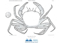 BHL Coloring Pages / Images from the BHL Collection that you can download and color yourself! Learn more about the #ColorOurCollections event, led by The New York Academy of Medicine, Feb. 1-5, 2016: http://biodiversitylibrary.org/collection/ColorOurCollections / by BHL