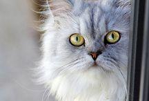 Cats :3