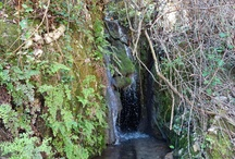 Aigua saforenca / Imatges de l'aigua saforenca