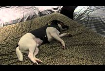 Before and After Videos! / by ThunderShirt
