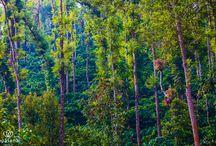 Upasana Surroundings & Nature Trails