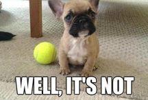 Pets / Gotta love them!