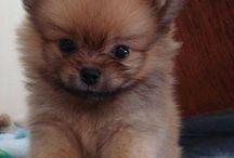 Litle puppy