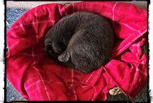 scheggia the cat / il mio amico a quattro zampe