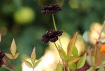 Flower Encylopedia / Our favorite blooms!
