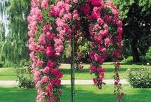 drzewa i kwiaty