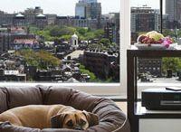 Design: Pet furniture