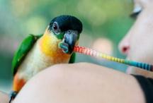 bird is the word