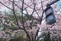 2013.03.18 豊川稲荷