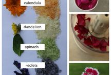 Eat edible flowers / Which flowers can we eat and how to use them