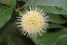 MY GARDEN / GARDEN, spring, summer, flowers, plants, idea, trees, gardening,