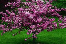 farebne stromy