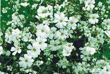 {garden: wildflower bed}
