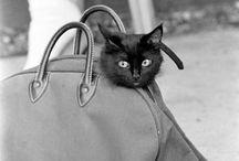 Cats / by Ngan Dinh Xuan