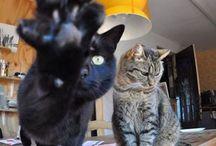 cat/mouse / cat