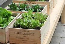 Dream in Green: Garden ideas / by Dietitian Eats