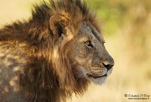 Wild Africa / My photos in Africa
