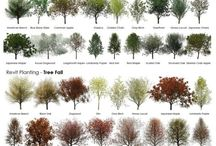 Landscaping ideas / by Chelsea Hand