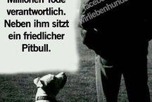 Hund ist Hund, es sind die wundervollsten Wesen dieser Welt