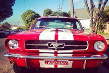 Mustang GT 500 <3 / my dream, my love <3
